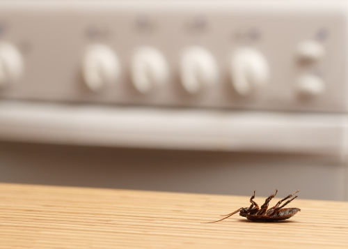 Why Roaches are Attracted to Your Home