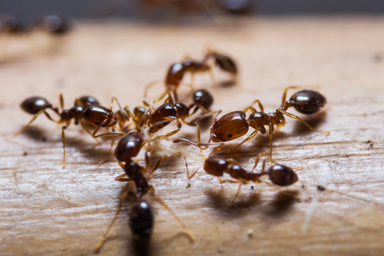Everything You Need to Know About Ant Bites (and How to Avoid Them) photo